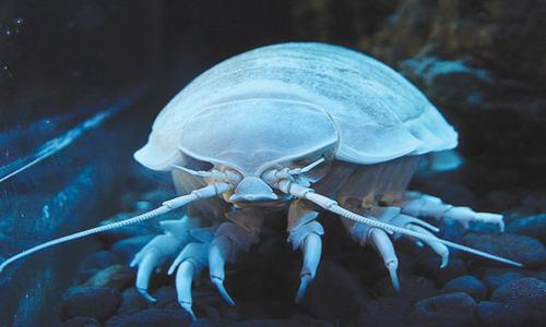 Rare sightings in the sea