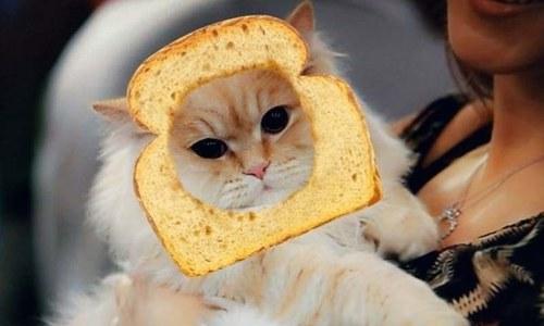 بلیوں کے لیے بھی اسنیپ چیٹ پر فلٹر متعارف