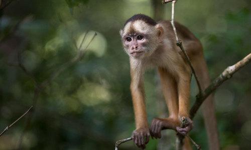بھارت: 'بندروں کے حملے' میں 70 سالہ شخص ہلاک