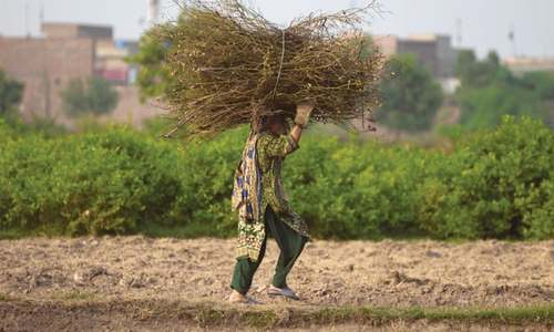 Punjab: upsetting the apple cart