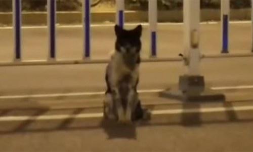 چین میں 'وفادار کتے' کی ویڈیو سوشل میڈیا پر وائرل
