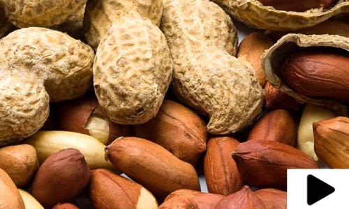 مونگ پھلی سردیوں کی اہم سوغات