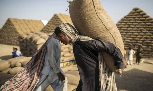 ECC to allow wheat export tomorrow