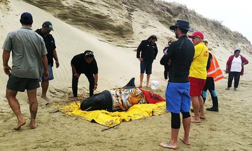 New Zealand rescuers save 6 stranded whales