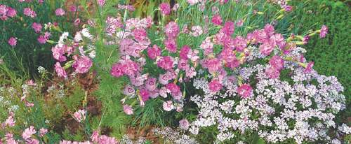 GARDENING: 'WHICH FRAGRANT PLANTS ARE SUITABLE FOR LAHORE?'