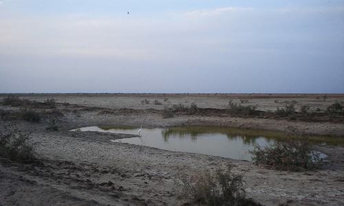 مچھلیوں اور پرندوں کی مسکن وہ جھیل جسے سیلاب نے تباہ کردیا
