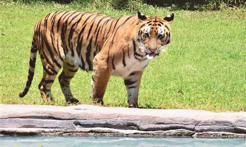 A safari in Bali