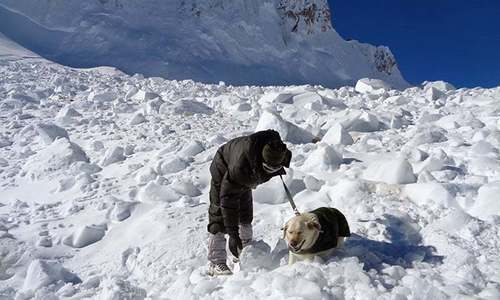 Avalanche in Kashmir Himalayas kills 1, leaves 9 missing