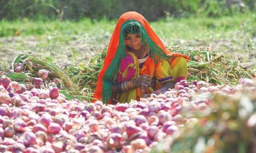 Restrictive gender norms affect innovation in the agri sector