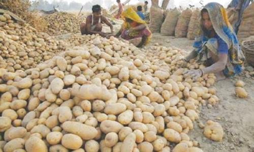 Who cares about the potato crisis?