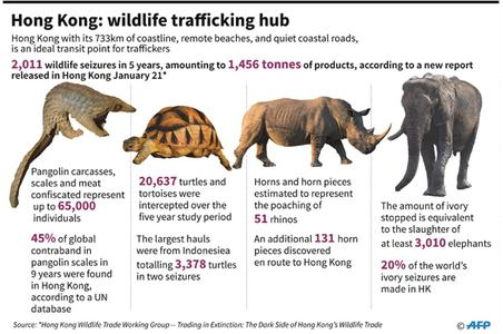 HK has failed to tackle wildlife smuggling epidemic: study