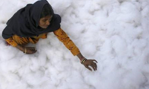 Sharp fall in cotton trading