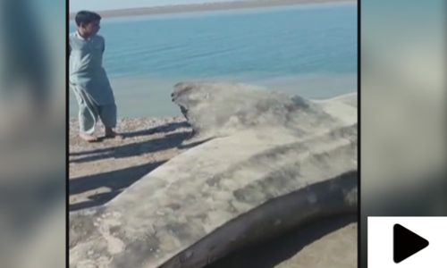 ماہی گیروں نے سمندر سے 15 فٹ لمبی اور 1800کلو وزنی وہیل پکڑ لی