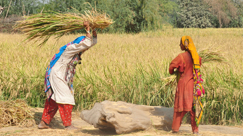 This play highlights the plight of female agricultural labourers