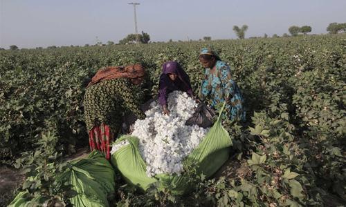 Cotton production short by 6.83pc