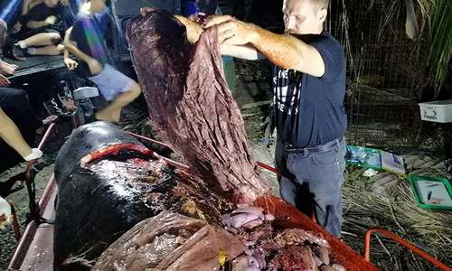 Dead whale in Philippines had 40kg of plastic in stomach