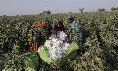 Cotton trading shrinks