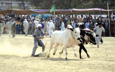 Local fairs promote culture, provide healthy entertainment: NA speaker