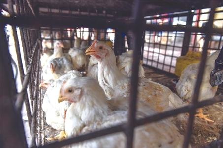 Chicken feed, water samples in city found contaminated with heavy metals