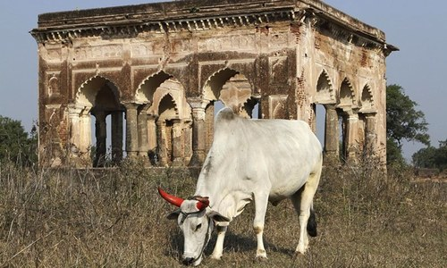 Man killed in new cow lynching in India