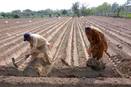 Govt for enhancing kharif crop production
