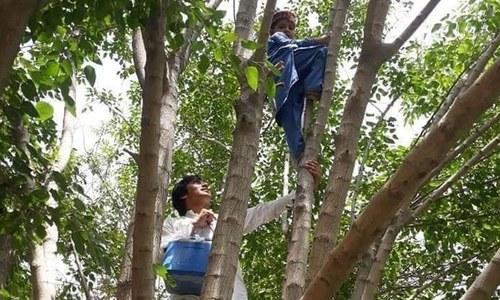 درخت پر چڑھ کر خدمات انجام دینے والے پولیو ورکرز کے سب ہی لوگ معترف