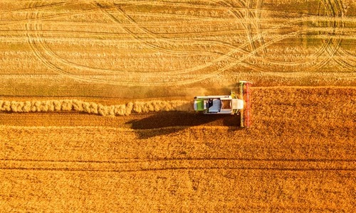 Will KP farmers quit wheat cultivation now that climate change is threatening crop?