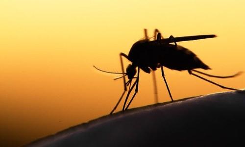 مچھروں سے چھٹکارہ حاصل کرنے کے آسان گھریلو نسخے