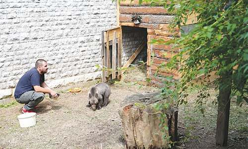 Orphaned baby bear finds home in Sarajevo zoo