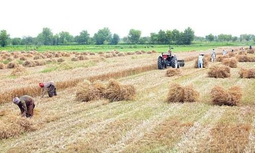 ECC bans wheat export amid roti price hike