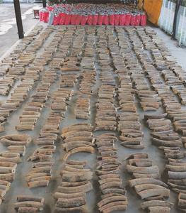Singapore makes its biggest illegal ivory seizure