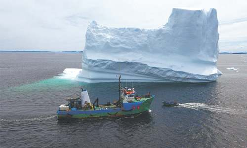 Canadian iceberg hunter in search of 'white gold'