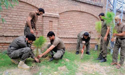 Over five million saplings to be planted in KP