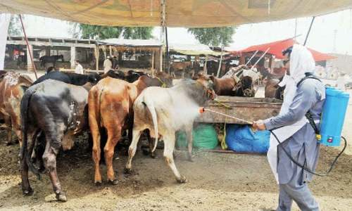 Farmers take a hit as Eid economy sinks