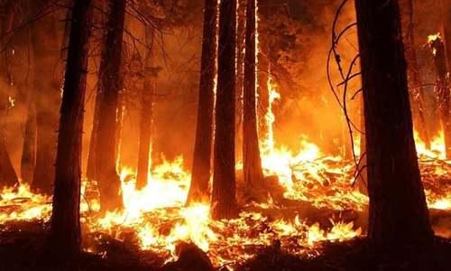 دنیا کی آکسیجن کا بڑا ذریعہ جل کر راکھ ہونے کے قریب
