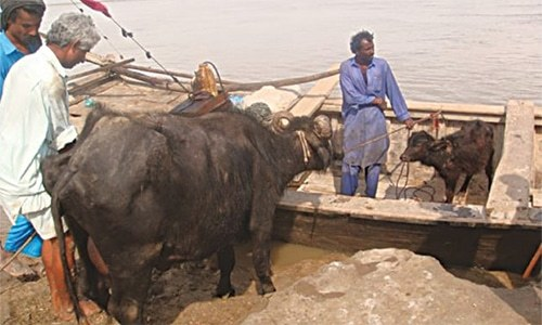 How to bring Indus delta back to life