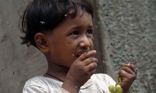 Flies overwhelm Karachi in monsoon 'hell'