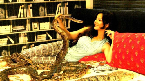 None of the wild animals I take pictures with are mine, says Rabi Pirzada