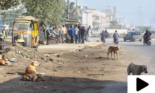 کراچی سمیت سندھ بھر میں سگ گزیدگی کے واقعات میں اضافہ