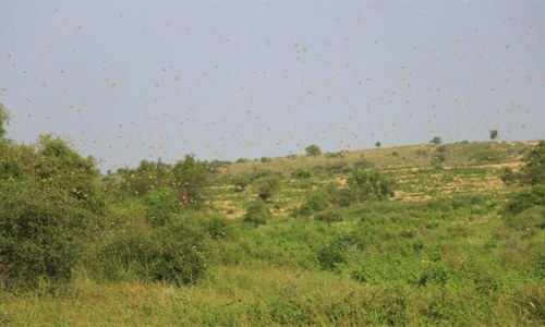 'Expired pesticide aggravated locusts attack situation'