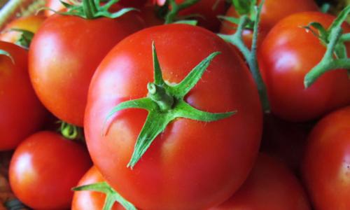 کراچی میں ٹماٹر کی قیمت 400 روپے فی کلو کی ریکارڈ سطح تک پہنچ گئی