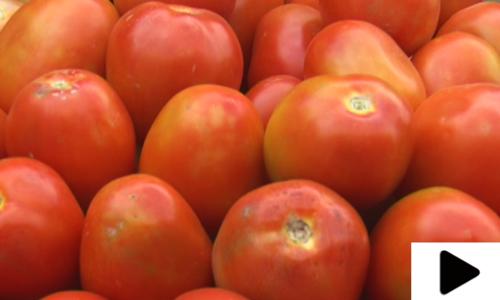 ٹماٹر اچانک 400 روپے کلو ہوگئے، قیمت کم کب ہوگی؟