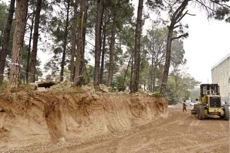 CDA may have to fell nine adult pines to construct interchange