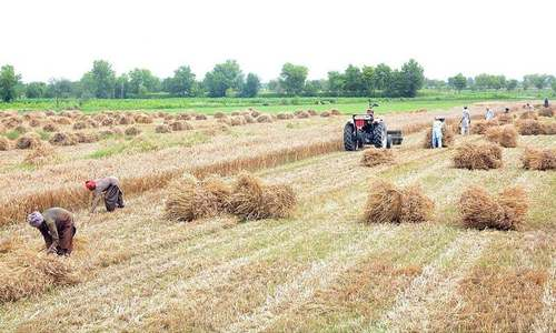 ECC rejects further increase in wheat support price