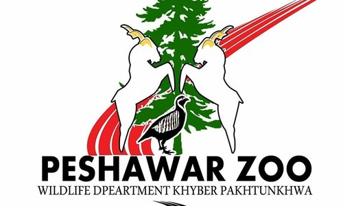 Elephants import for Peshawar Zoo in limbo over NOC issue