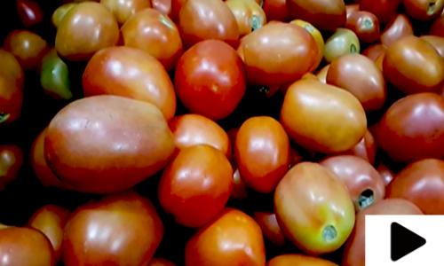 بھارتی سکھ یاتری ٹماٹر اور پیاز لے کر پاکستان پہنچ گئے
