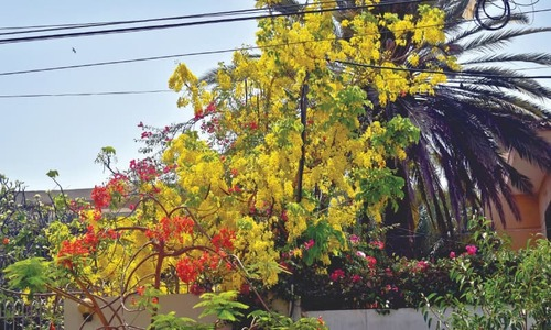 Exotic species outnumber native trees along city's streets