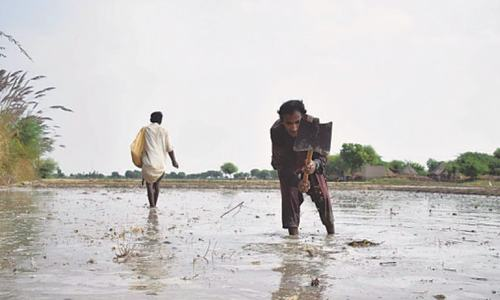 Sindh ramps up efforts to achieve farm sector sustainability