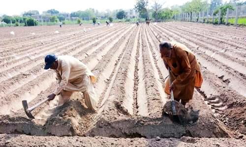 Poor soil health to hit food, water security: expert