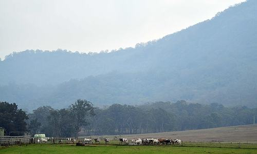 Relief as rain falls over Australian bushfires